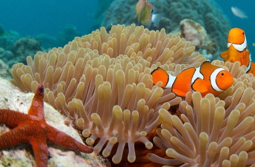 Австралия, обитатели Большого Барьерного Рифа