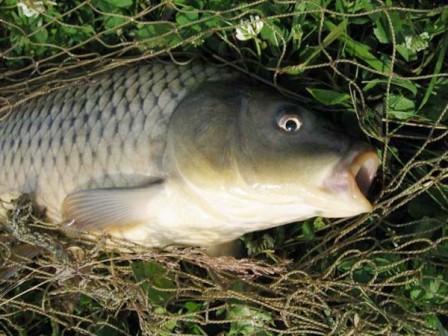 Богатая рыбными ресурсами Волга. База Пеней
