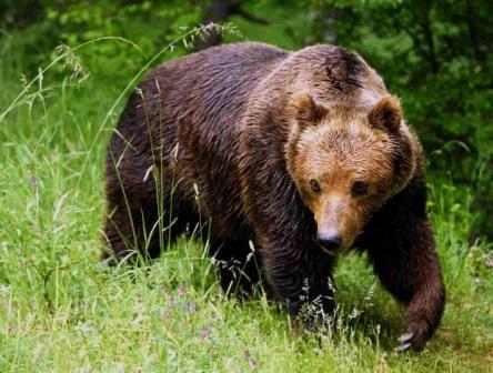 встреча человека с медведем