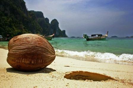 кокосовые строва - экспорт кокоса