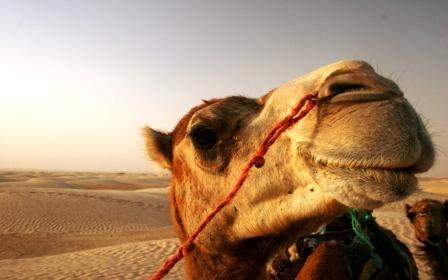 транспорт в Тунисе